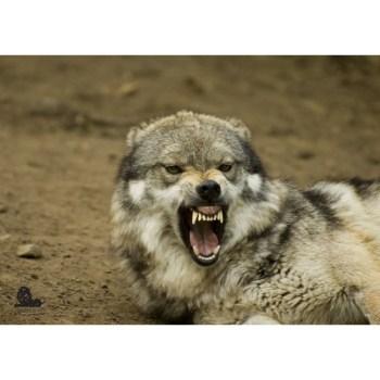 terc-vlk